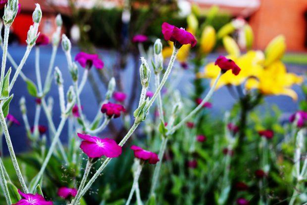 featured-purple-flowers